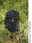 Купить «Стеклянная банка с черникой в лесу», эксклюзивное фото № 3753537, снято 2 августа 2012 г. (c) Елена Коромыслова / Фотобанк Лори