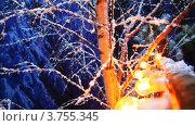 Купить «Заснеженная береза», видеоролик № 3755345, снято 4 декабря 2011 г. (c) Losevsky Pavel / Фотобанк Лори