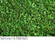 Зеленая трава. Стоковое фото, фотограф light / Фотобанк Лори