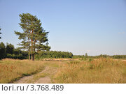 Дерево, дорога. Стоковое фото, фотограф Александр Аникеев / Фотобанк Лори