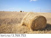 Рулоны соломы на скошенном поле. Стоковое фото, фотограф Алексей Сахаров / Фотобанк Лори