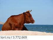 Купить «Красная корова у синего моря», эксклюзивное фото № 3772669, снято 14 августа 2012 г. (c) Щеголева Ольга / Фотобанк Лори