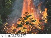 Лесной пожар. Стоковое фото, фотограф Ольга Хлудова / Фотобанк Лори
