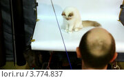 Купить «Фотограф снимает кошку на белом фоне в фотостудии», видеоролик № 3774837, снято 27 января 2012 г. (c) Losevsky Pavel / Фотобанк Лори