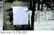 Купить «Мишень», видеоролик № 3776257, снято 30 декабря 2011 г. (c) Losevsky Pavel / Фотобанк Лори