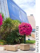 """Купить «Дворец фестивалей на набережной """"La Croisette"""", Канны, Франция», фото № 3777193, снято 13 июня 2010 г. (c) ElenArt / Фотобанк Лори"""