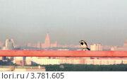 Купить «Птица сидит на трубе на фоне панорамы Москвы», видеоролик № 3781605, снято 2 апреля 2012 г. (c) Losevsky Pavel / Фотобанк Лори