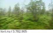 Купить «Лес с деревьями и травой в тумане, вид в движении», видеоролик № 3782905, снято 2 мая 2012 г. (c) Losevsky Pavel / Фотобанк Лори