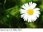 Купить «Крупная ромашка на фоне травы», фото № 3786761, снято 1 июня 2020 г. (c) Елена Шуршилина / Фотобанк Лори