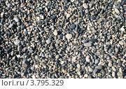 Купить «Мелкая морская галька на пляже», фото № 3795329, снято 26 июля 2012 г. (c) Юрий Серебряков / Фотобанк Лори