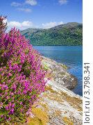 Шотландский летний пейзаж с озером (2012 год). Стоковое фото, фотограф Tamara Kulikova / Фотобанк Лори
