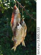 Три сушеные рыбы. Стоковое фото, фотограф Ольга Хлудова / Фотобанк Лори