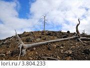 Купить «Катаклизм. Сухие деревья», фото № 3804233, снято 31 августа 2012 г. (c) Валерий Александрович / Фотобанк Лори