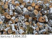 Березовые поленья. Стоковое фото, фотограф Воробьев Валерий / Фотобанк Лори