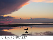 Закат на Финском заливе. Стоковое фото, фотограф Алексей Ткаченко / Фотобанк Лори