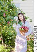 Купить «Улыбающаяся девушка собирает яблоки», фото № 3808881, снято 22 октября 2019 г. (c) Майя Крученкова / Фотобанк Лори