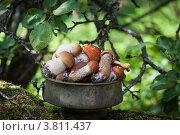 Грибы в миске. Стоковое фото, фотограф Дмитрий Ворона / Фотобанк Лори