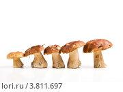 Белые грибы. Стоковое фото, фотограф Владимир Сазонов / Фотобанк Лори