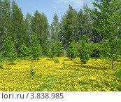 Весна в Подмосковье. Стоковое фото, фотограф Павел Фесенко / Фотобанк Лори