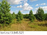 Лес. Стоковое фото, фотограф Павел Танцура / Фотобанк Лори