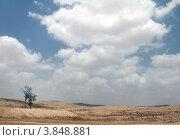 Пустыня Негев. Стоковое фото, фотограф Felix Bensman / Фотобанк Лори