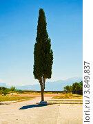 Одинокое дерево на фоне голубого неба. Стоковое фото, фотограф Евгений Егоров / Фотобанк Лори
