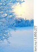 Купить «Зимний пейзаж», фото № 3850277, снято 14 января 2012 г. (c) Икан Леонид / Фотобанк Лори