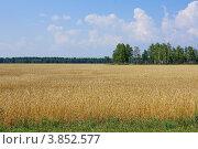 Алтайское поле. Стоковое фото, фотограф Виктор Четошников / Фотобанк Лори