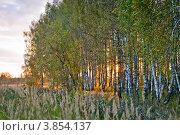 Купить «Яркий осенний закат в березовой роще», фото № 3854137, снято 19 сентября 2012 г. (c) Ольга Денисова / Фотобанк Лори