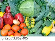Свежие овощи. Стоковое фото, фотограф Светлана Давыдова / Фотобанк Лори