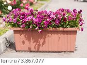 Купить «Уличный вазон с цветами», фото № 3867077, снято 22 июня 2012 г. (c) Татьяна Макотра / Фотобанк Лори