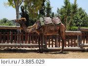 Купить «Верблюд», фото № 3885029, снято 5 июня 2012 г. (c) Хименков Николай / Фотобанк Лори