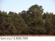 Купить «Сухановский парк», фото № 3890769, снято 29 сентября 2012 г. (c) Кирова Наталья / Фотобанк Лори