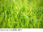 Зеленая трава крупным планом. Стоковое фото, фотограф Olha Ukhal / Фотобанк Лори