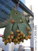 Купить «Подвешенный на крюке кактус Сабрес с плодами. Рынок на острове Санторин», фото № 3909685, снято 28 августа 2012 г. (c) Олег Хмельниц / Фотобанк Лори