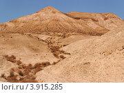 Сухой ручей в каменной пустыне (2011 год). Стоковое фото, фотограф Shlomo Polonsky / Фотобанк Лори