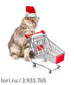 Купить «Кошка в новогоднем колпаке с продуктовой карзиной на белом фоне», фото № 3933765, снято 16 июля 2019 г. (c) Владислав Старожилов / Фотобанк Лори