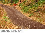 Пешеходная дорожка в парке, скамейка. Стоковое фото, фотограф Андрей Новотрясов / Фотобанк Лори