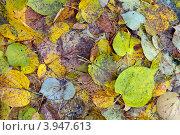 Купить «Опавшие осенние листья», фото № 3947613, снято 19 октября 2012 г. (c) Игорь Долгов / Фотобанк Лори