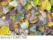 Купить «Опавшие осенние листья», фото № 3947765, снято 19 октября 2012 г. (c) Игорь Долгов / Фотобанк Лори