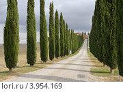 Классический Тосканский пейзаж с кипарисами вдоль грунтовой дороги. Валь де Орча, Италия (2012 год). Стоковое фото, фотограф Знаменский Олег / Фотобанк Лори