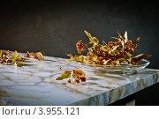 Сушеные цветки липы. Стоковое фото, фотограф Ольга Денисова / Фотобанк Лори