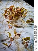 Сушеные цветки липы в блюдце на столе. Стоковое фото, фотограф Ольга Денисова / Фотобанк Лори