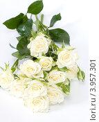 Купить «Белые розы. Букет», фото № 3957301, снято 10 сентября 2012 г. (c) Ирина Буракова / Фотобанк Лори