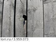 Деревянные доски (Фон) Стоковое фото, фотограф Лев Соловьев / Фотобанк Лори