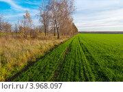 Зеленое поле с озимыми. Стоковое фото, фотограф Зобков Георгий / Фотобанк Лори