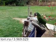 Попугай. Стоковое фото, фотограф Михаил Копылов / Фотобанк Лори