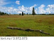 Сухое бревно на поле. Стоковое фото, фотограф Вероника Денега / Фотобанк Лори