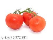 Три помидора на ветке, белый фон. Стоковое фото, фотограф Роберт Ивайсюк / Фотобанк Лори