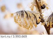Ива. Стоковое фото, фотограф Юрий Груздев / Фотобанк Лори